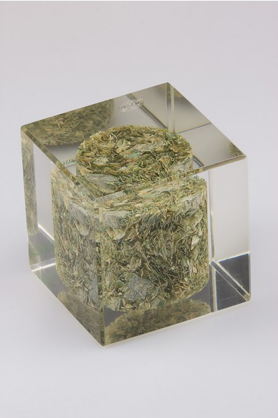 Acrylic Cube with Embedded Seeds